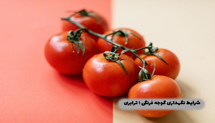 شرایط-نگهداری-گوجه-فرنگی-؛-ترابری
