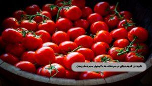 نگهداری-گوجه-فرنگی-در-سردخانه-ها