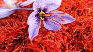 شرایط نگهداری گل زعفران در سردخانه